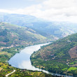 Vineyars in Douro Valley — Stock Photo #32444835