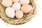 Eggs closeup — Stock Photo