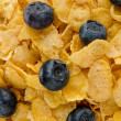 Cereal and blueberries — Stock Photo #34423539