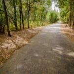 Road in autumn wood — Stock Photo #35127037