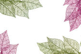 Christmas decorative green and pink leaves — 图库照片