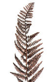 Christmas decorative Brown fern leaf — Stock Photo
