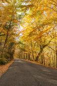 Autumn, Geres, Portugal — Stock Photo