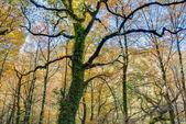 Geres National Park — Fotografia Stock