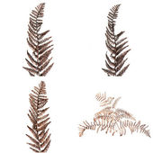 Brown fern leaves — Stock Photo