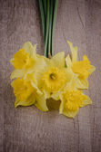 Jonquil flowers — Stock Photo
