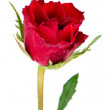 Beautiful red rose — Stock Photo #9408392