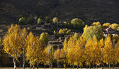 Autumn color — Stock Photo