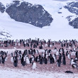 Antarctic penguin — Stockfoto
