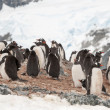 Antarctic penguin — Stock Photo