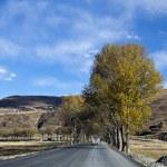 Highland road — Stock Photo #35576829