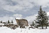 Snow landscape — Stock Photo