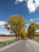 Color de otoño — Foto de Stock