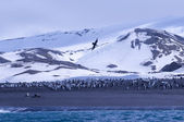 Paysage antarctique — Photo