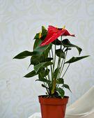 Chinese bonsai — Stock Photo