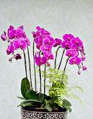 Bonsai cinesi — Foto Stock