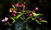 Rostlina — Stock fotografie