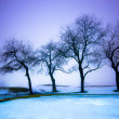 Winter Landscape — Stock Photo #21303417