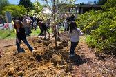 Tree Planting — Stock Photo