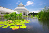 New York Botanical Garden — 图库照片
