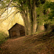 Secluded Cabin — Stock Photo