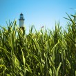 Reeds and Lighthouse — Stock Photo