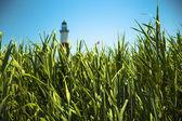 Sazlık ve deniz feneri — Stok fotoğraf
