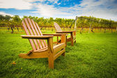 Chair in Vineyard — Stock Photo