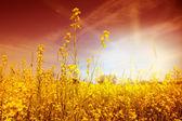 идиллические цветы — Стоковое фото