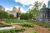 NYC Urban Farm — Stock Photo