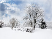 Landscape in Winter Park — Stock Photo