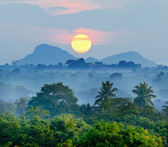 Sunrise in the jungles — Stock Photo
