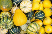 Autumn theme with many gourds, pumpkins — Stock Photo