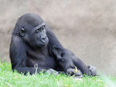 Figure of the young gorilla  — Стоковое фото
