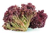 Red leaf lettuce — Stock Photo