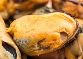 Mussels closeup — Stock Photo