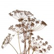 Fennel over white background — Stock Photo #12034737