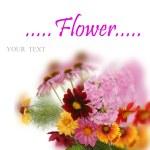Celebratory bouquet of summer flowers — Stock Photo