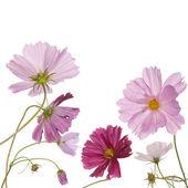 O design da bela flor — Foto Stock