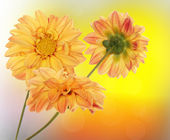 Design beautiful flora — Stock Photo