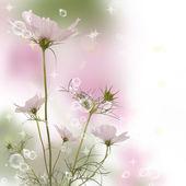 Flower beautiful garden flowers.Flora design — Stock Photo