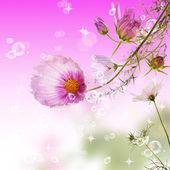 The decorative garden spring flowers — Stock Photo