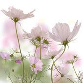 A flor de primavera linda — Fotografia Stock