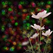 The decorative flowers — Stock Photo