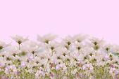 The fields beautiful flowers — Stock Photo