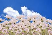 I campi bellissimi fiori — Foto Stock