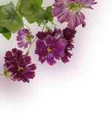 Decorative beautiful dark pink flowers — Stock Photo