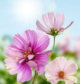 The summer beautiful flowers.Floral border — Stock Photo