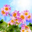 Decorative garden beautiful flowers — Foto de Stock