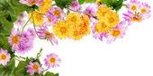 Flowers beautiful decorative border — Stock Photo